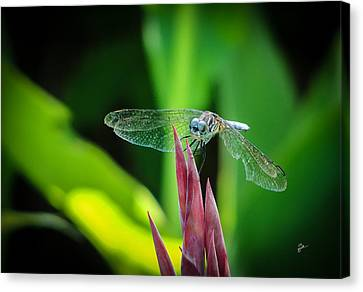 Canvas Print featuring the photograph Chomped Wing by TK Goforth