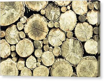Chopped Wood Canvas Print by Tom Gowanlock