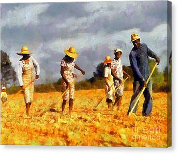 Chopping Cotton Canvas Print