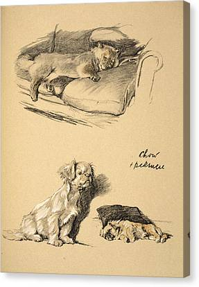 Chow And Pekinese, 1930, Illustrations Canvas Print by Cecil Charles Windsor Aldin