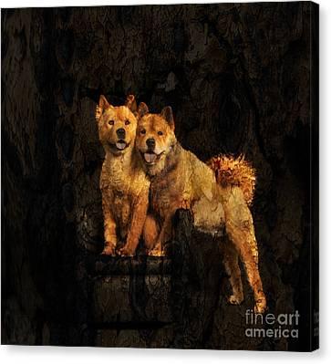 Chow Chow Canvas Print