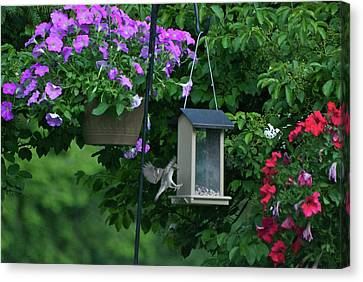 Canvas Print featuring the photograph Chow Time For This Bird by Thomas Woolworth