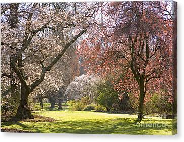 Christchurch Blossom In Hagley Park Canvas Print by Colin and Linda McKie