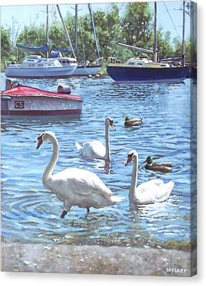 M P Davey Canvas Print - Christchurch Harbour Swans And Boats by Martin Davey