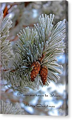Pine Cones Canvas Print - Christmas Card 2013 Two by Al Bourassa