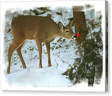 Canvas Print featuring the photograph Christmas Doe by Clare VanderVeen