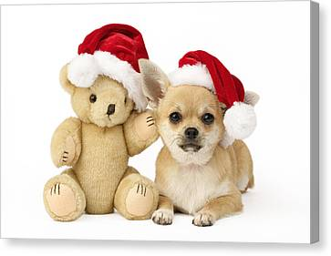 Christmas Eve Canvas Print - Christmas Dog And Teddy by Greg Cuddiford
