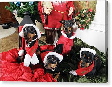 Christmas Doggies Canvas Print