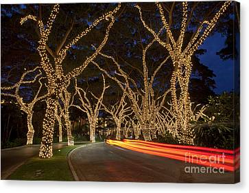 Christmas In Wailea Canvas Print