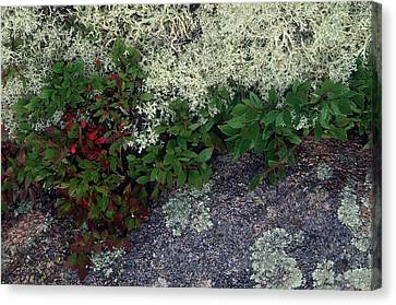 Canvas Print - Christmas Moss by Harold E McCray
