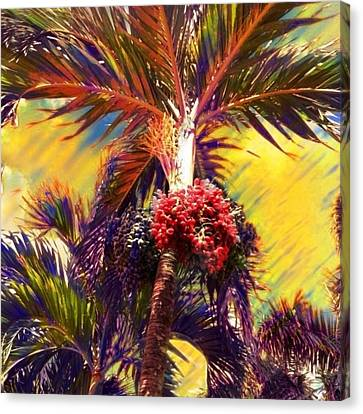 Christmas Palm Tree In Yellow - Square Canvas Print by Lyn Voytershark