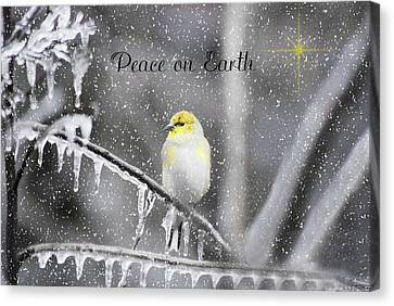 Christmas Peace Canvas Print
