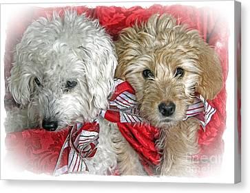 Christmas Puppy Canvas Print by Bob Hislop