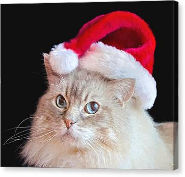 Feline Canvas Print - Christmas Ragdoll Cat by Maria Dryfhout