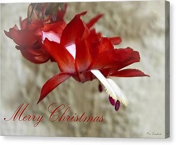 Christmas Red Beauty Card Canvas Print