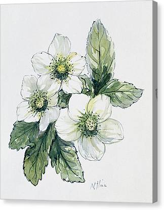 Christmas Rose Canvas Print by Nell Hill