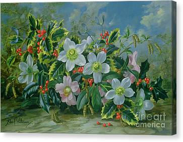 Christmas Roses And Holly Canvas Print by Albert Williams