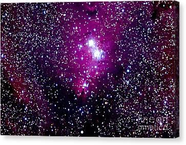 Monoceros Canvas Print - Christmas Tree Cluster And Cone Nebula by John Chumack