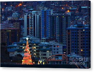 Christmas Tree In La Paz Canvas Print