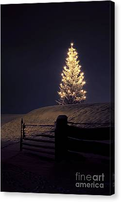 Christmas Tree In Snow Canvas Print