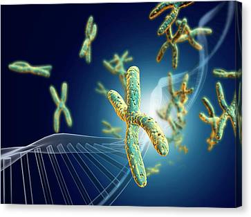 Chromosome Canvas Print - Chromosomes With Dna by Harvinder Singh