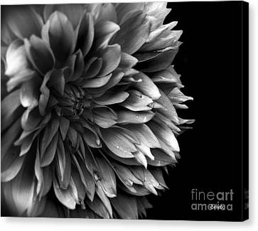 Chrysanthemum In Black And White Canvas Print by Eena Bo
