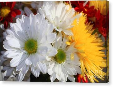 Canvas Print featuring the photograph Chrysanthemum Punch by Cathy  Beharriell