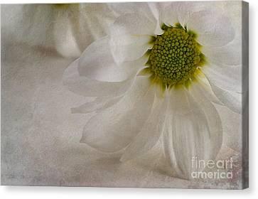 Chrysanthemum Textures Canvas Print by John Edwards
