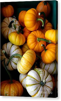 Cinderella Pumpkin Pile Canvas Print by Kerri Mortenson