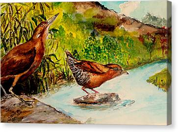 Canvas Print featuring the painting Cinnamon Bittern by Jason Sentuf