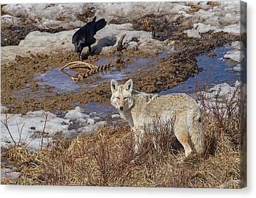 Circle Of Life Canvas Print by Sandy Sisti
