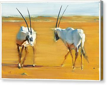 Circling Arabian Oryx Canvas Print by Mark Adlington