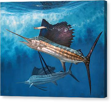 Circling The Bait Canvas Print by Don  Ray