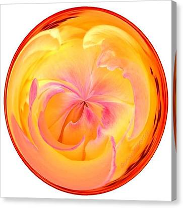 Edit Canvas Print - Circumspect Rose by Anna Porter