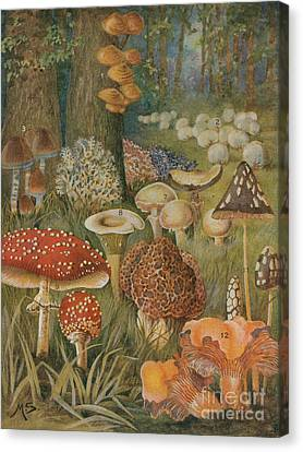 Citizens Of The Land Of Mushrooms Canvas Print by Science Source