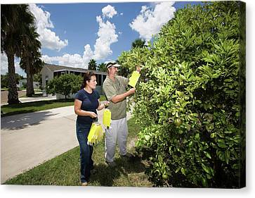 Citrus Greening Disease Research Canvas Print by Peggy Greb/us Department Of Agriculture