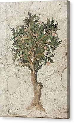 Citrus Tree Mozaic Canvas Print by David Parker