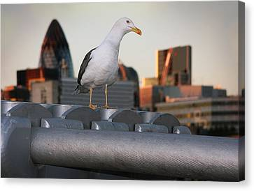 City Seagull Canvas Print by Stephen Norris