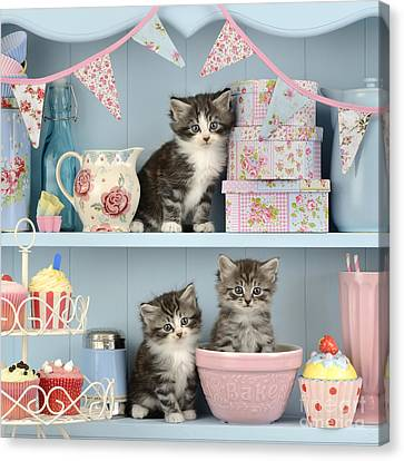 Baking Shelf Kittens Canvas Print