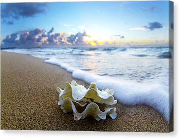 Seashells Canvas Print - Clam Foam by Sean Davey