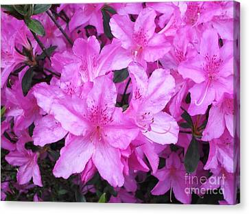 Canvas Print featuring the photograph Azaleas by Donna Dixon
