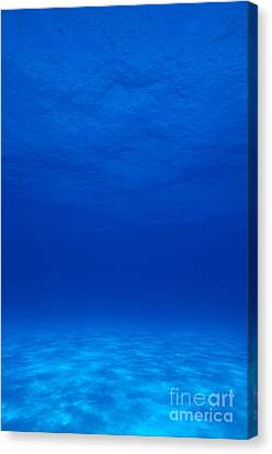 Clear Tropical Water Canvas Print by F Stuart Westmorland