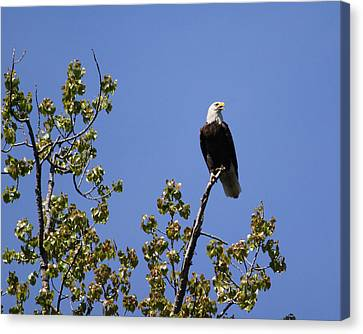 Clear View Canvas Print by Bruce  Morrell