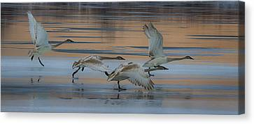 Cleared For Take Off Canvas Print by Gary Hall