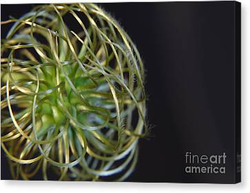 Clematis Close Up Flower Canvas Print by Art Photography