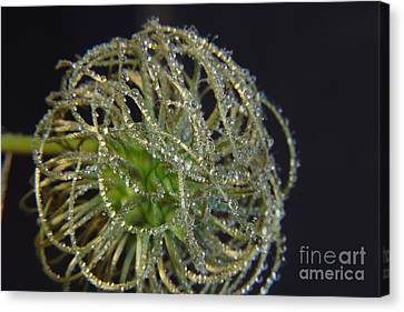 Clematis Close Up With Water Drops Canvas Print by Art Photography