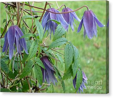 Canvas Print featuring the photograph Clematis  by Katy Mei