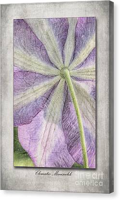 Clematis Miniseelik  Canvas Print by John Edwards