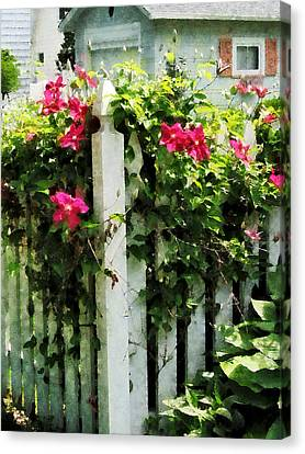 Clematis On Fence Canvas Print