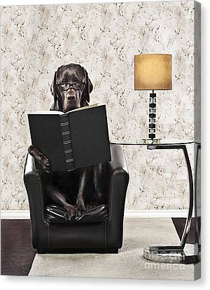 Clever Dog Reading Book Canvas Print by Justin Paget
